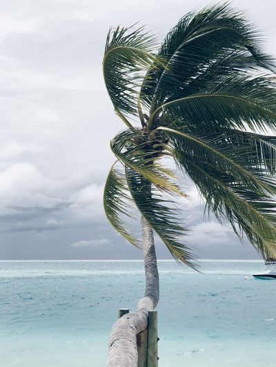 Close-up of palm tree by sea against sky