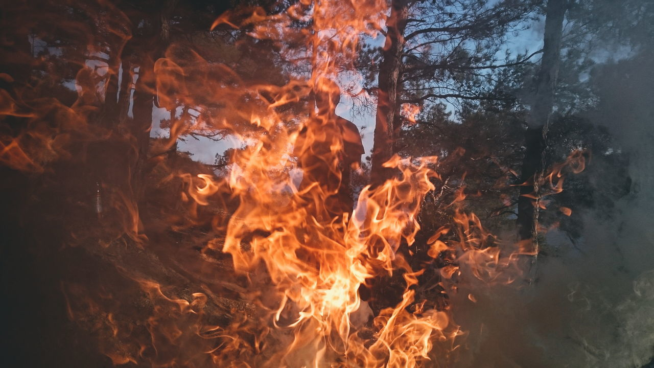 Fire against trees in forest