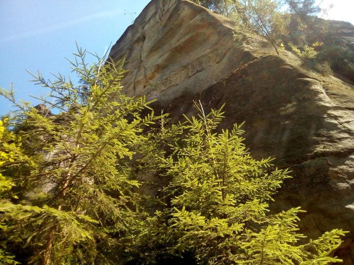 Berg Tree Sky