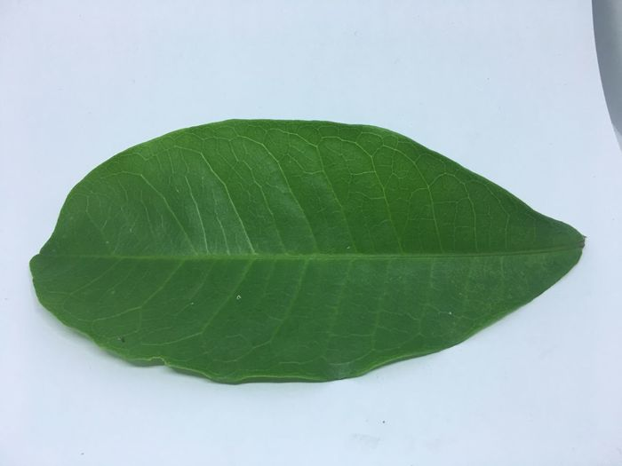 High angle view of green leaves on white background
