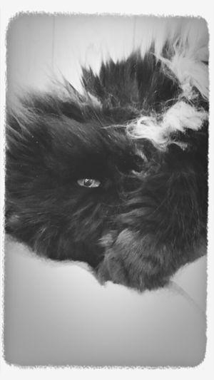 Danny my cat baby.