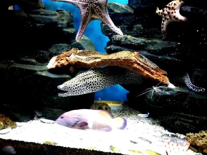 московский зоопарк московскийзоопарк морские жители