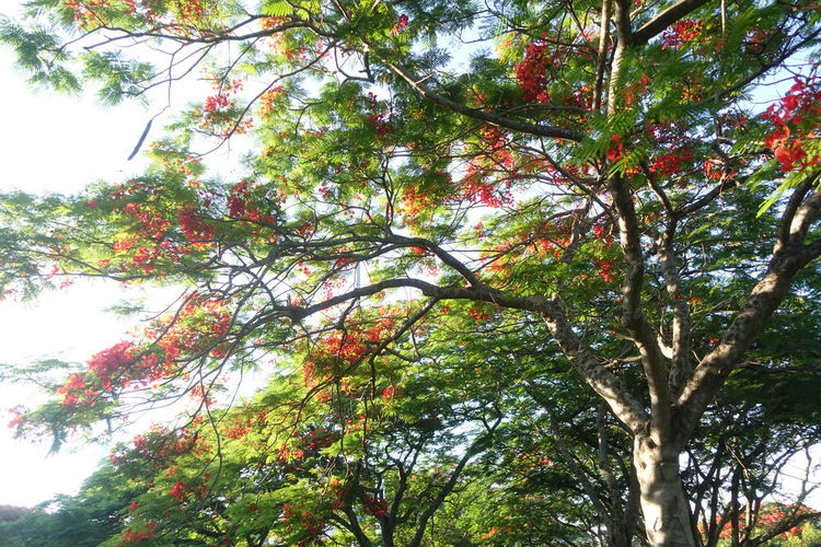 Tree Branch Sky Plant Life Growing Blooming Blossom In Bloom