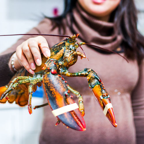 Midsection of woman holding lobster at fish market