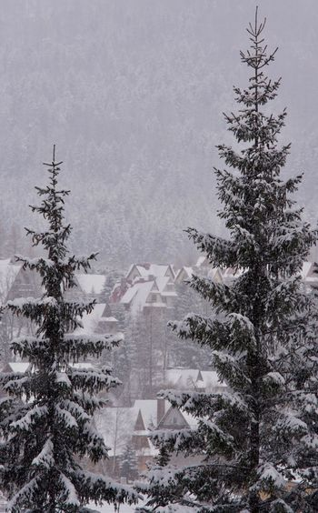 Christmas Zakopane Poland Winter Tree Snow Cold Temperature Plant Nature Day No People Frozen Beauty In Nature Tranquility Coniferous Tree Outdoors Covering Growth Pine Tree Environment