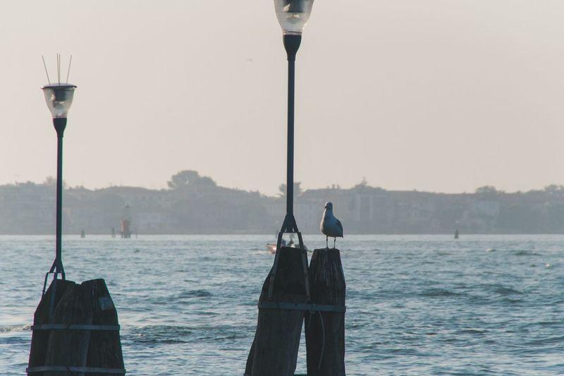 Seagull perching on street light against sea