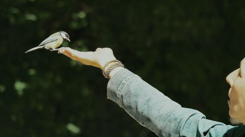 Campo Grande Valladolid🇪🇸 Spain🇪🇸 The Week Of Eyeem The Portraitist - 2017 EyeEm Awards EyeEm Selects Summer Nature Portrait Tree Day Outdoors Eyem Gallery Eyeemphoto Green Color Eyeem Market Green The Street Photographer - 2017 EyeEm Awards