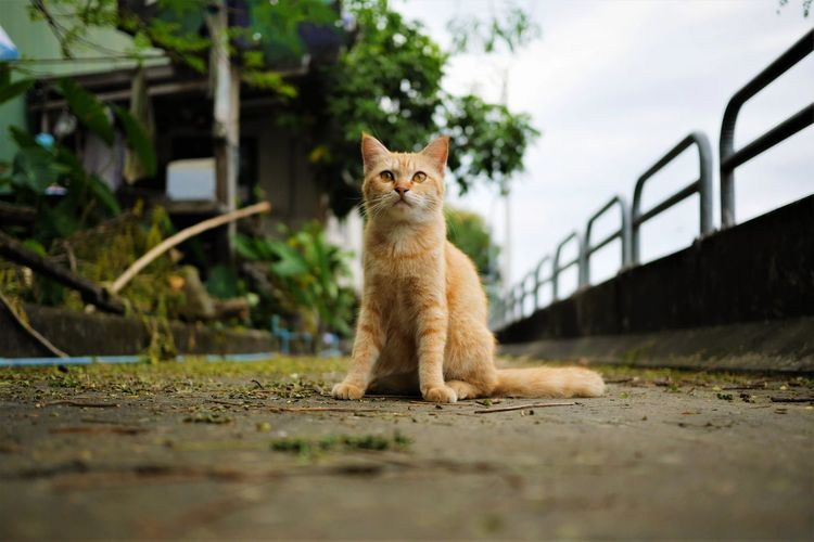 Watching with curiosity Pets Feline Domestic Cat Beauty Collar Sky Animal Themes Tabby Cat Maine Coon Cat Tortoiseshell Cat Whisker Cat Yellow Eyes Animal Face Persian Cat  Ginger Cat Stray Animal At Home Carnivora Tabby Undomesticated Cat Paw Kitten