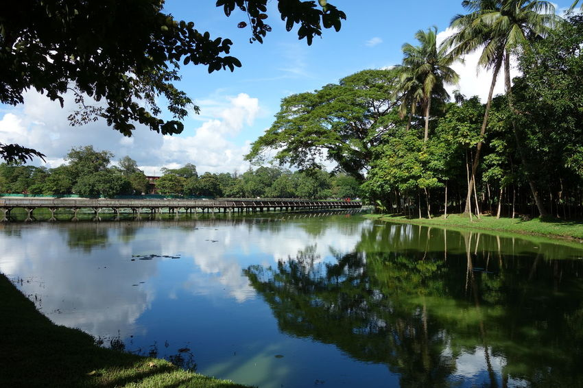 Kandawgyi Park Yangon Beauty In Nature Cloud - Sky Day Growth Kandawgyi Lake Myanmar Nature No People Outdoors Park Reflection Scenics Sky Tranquil Scene Tranquility Tree Water
