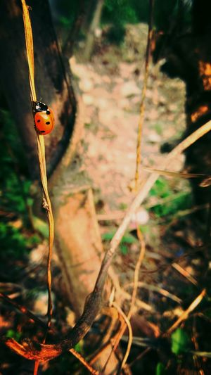 iT's All AboUt BalaNcE..... Showcase March Things I Like Nature_collection Lady Bird🐞 Urban Spring Fever Life Balance Act .. Nature's Diversities Fine Art Photography