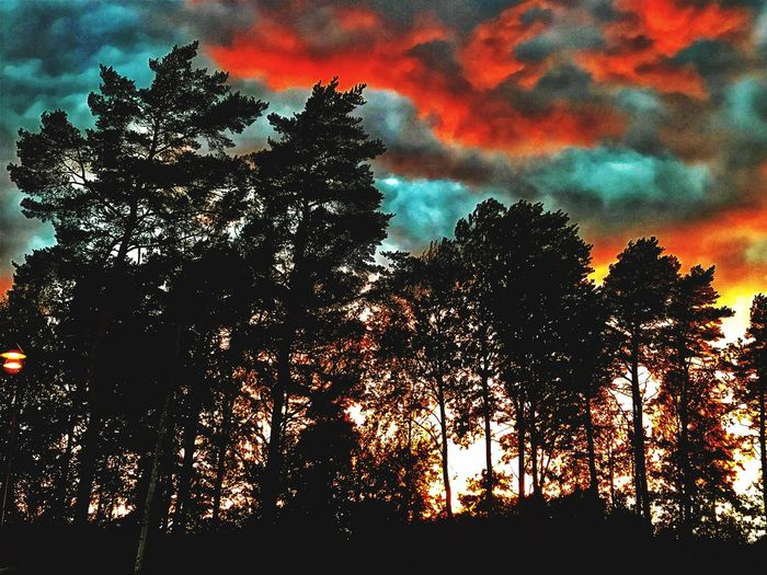 Inas Sunset Cloud - Sky Tree Sky Plant Low Angle View Silhouette Beauty In Nature Sunset Scenics - Nature Nature Tranquility Growth Tranquil Scene Orange Color Outdoors Multi Colored No People Branch Dramatic Sky Cloud - Sky Tree Sky Plant Low Angle View Silhouette Beauty In Nature Sunset Scenics - Nature Nature Tranquility Growth Tranquil Scene Orange Color Outdoors Multi Colored No People Branch Dramatic Sky