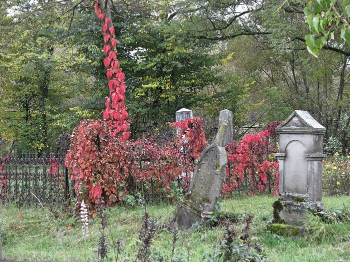 Autumn Autumn colors Cemetery Cemetery Photography Beauty In Nature Branch Day Field Grass Green Color Growth Nature No People Outdoors Plant Tombstones Tree