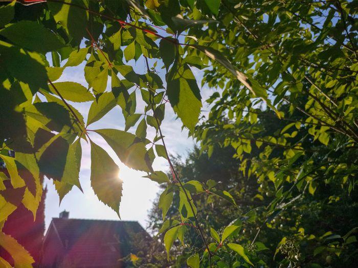 Tree Leaf Rural