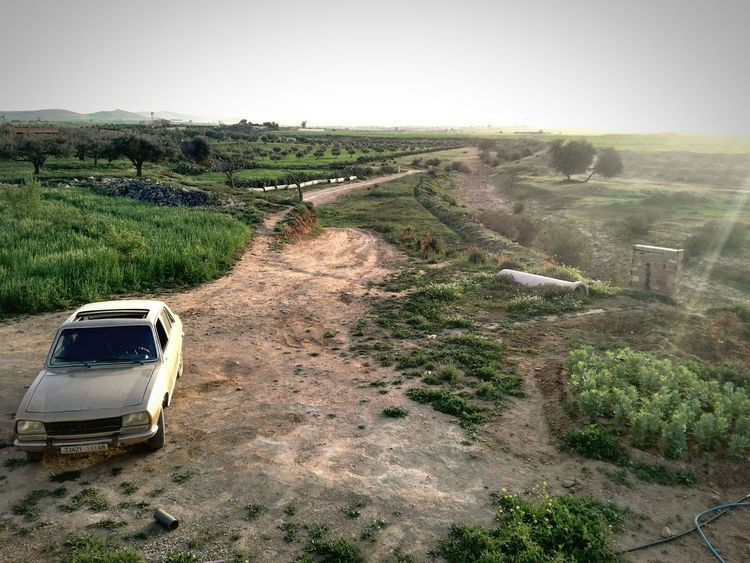 Peugeot Peugeot504 Frenshmusclees Sun Nature Summerfeelings Friends Landscape Sky Outdoors No People Day Agriculture Rural Scene Morocco Summer Vibes Tree Life Water Passion