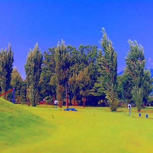 風の丘 Blue Breeze Green Trees Park Landscape いやし  青空 緑 公園 ポプラ  草原  旅 そよ風