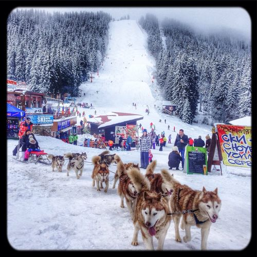 Snow ❄ Dogs Skiing Holiday