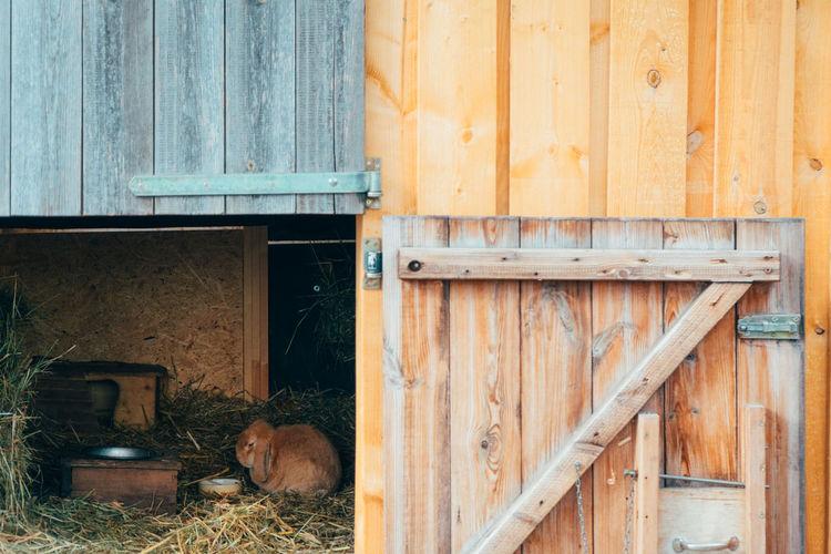 Travel Lifestyles City Life Animal Themes Zoo Rabbit