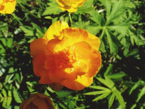 Flower Collection Summer ☀ Tomsk Region,
