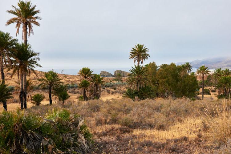 Scenic view of trees on desert against sky