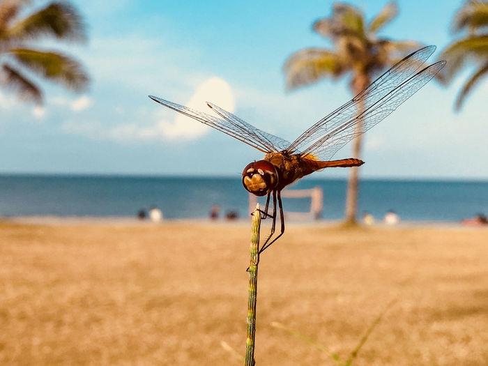 Close-up of grasshopper on beach