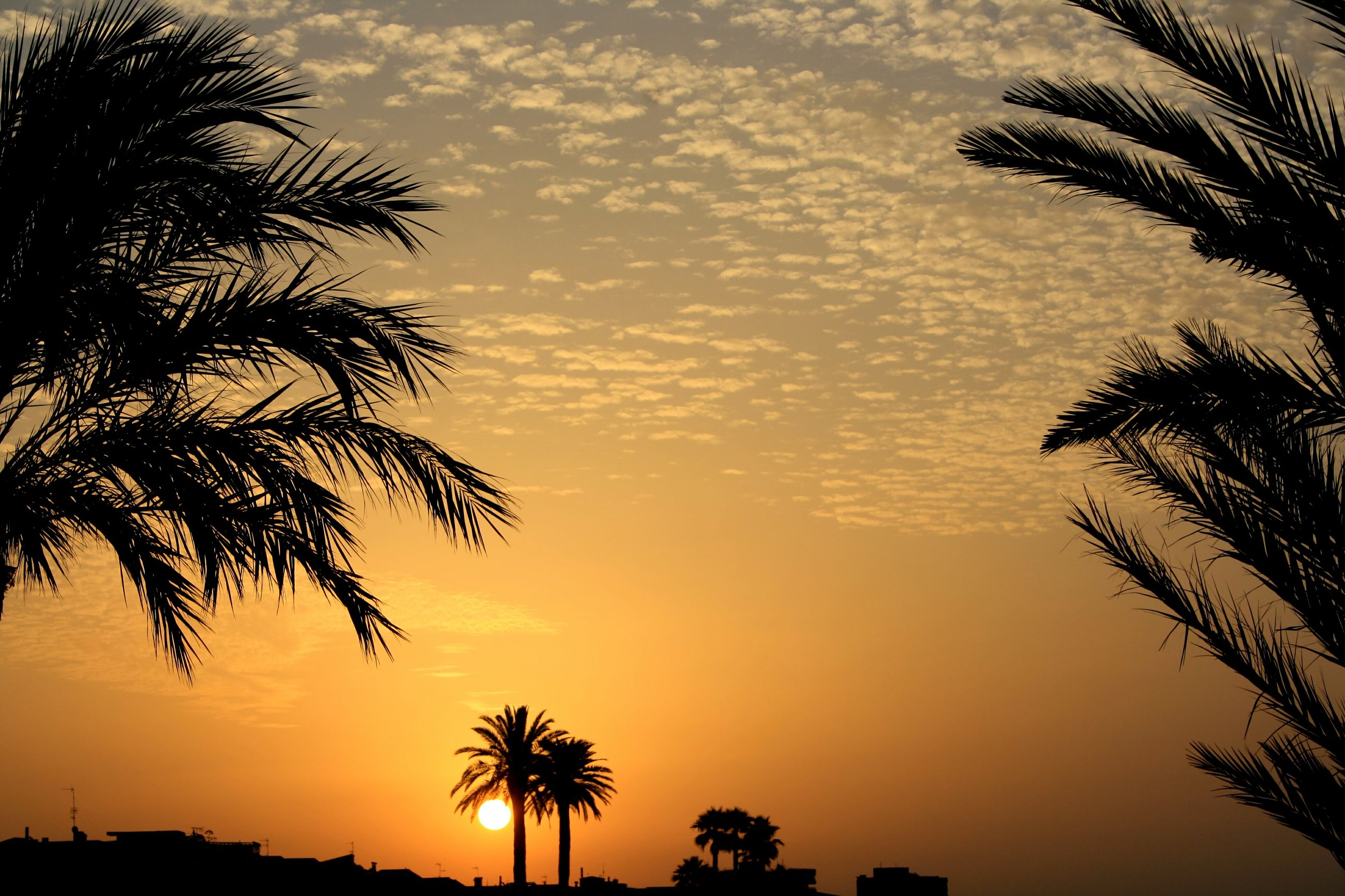 sunset, palm tree, silhouette, tree, scenics, tranquil scene, beauty in nature, tranquility, sky, orange color, idyllic, nature, growth, cloud - sky, outdoors, tree trunk, sun, majestic, coconut palm tree, romantic sky, branch, outline, tropical tree, moody sky, palm frond, non-urban scene, atmospheric mood, dramatic sky, remote, no people, palm leaf, tall - high