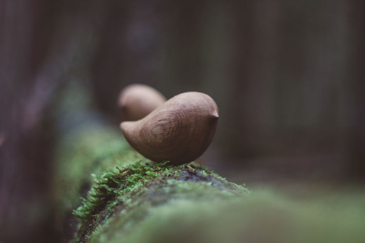 Toy Toys Wooden Wooden Toys Bird Wood Forest Tree Close-up Selective Focus Growth Plant No People Nature Day Beauty In Nature Green Color Food Vegetable Mollusk Gastropod Focus On Foreground Freshness Moss Outdoors Vulnerability  Snail Craft Crafts Handmade