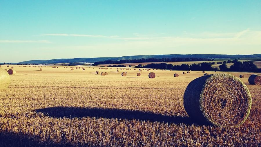 Abgeerntetes Feld bei Etzelsbach/Steinbach Rural Scene Field Hay Harvesting Landscape Sunlight Shadow Tranquil Scene Rural Scene Bale  Field Agriculture Hay Tranquility Sky Scenics Farm Blue Nature Outdoors Harvesting Non-urban Scene Day Beauty In Nature First Eyeem Photo