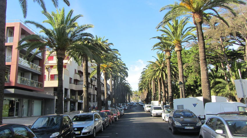 The Stree of palm trees.. Supernormal Light Up Your Life Palm Trees Love To Take Photos :)