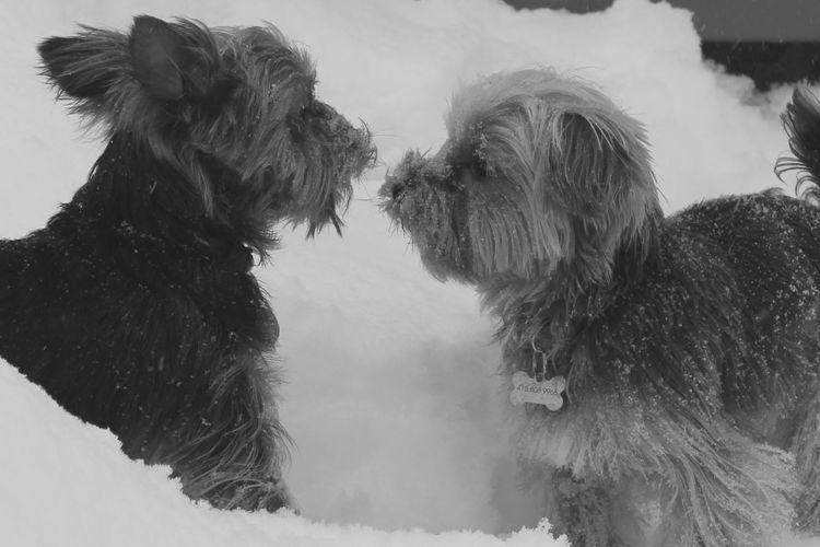 Dogs Mammal
