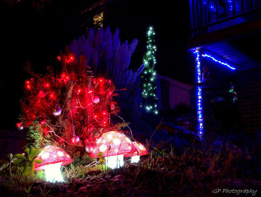 Showcase: December Christmas Garden Christmas Lights