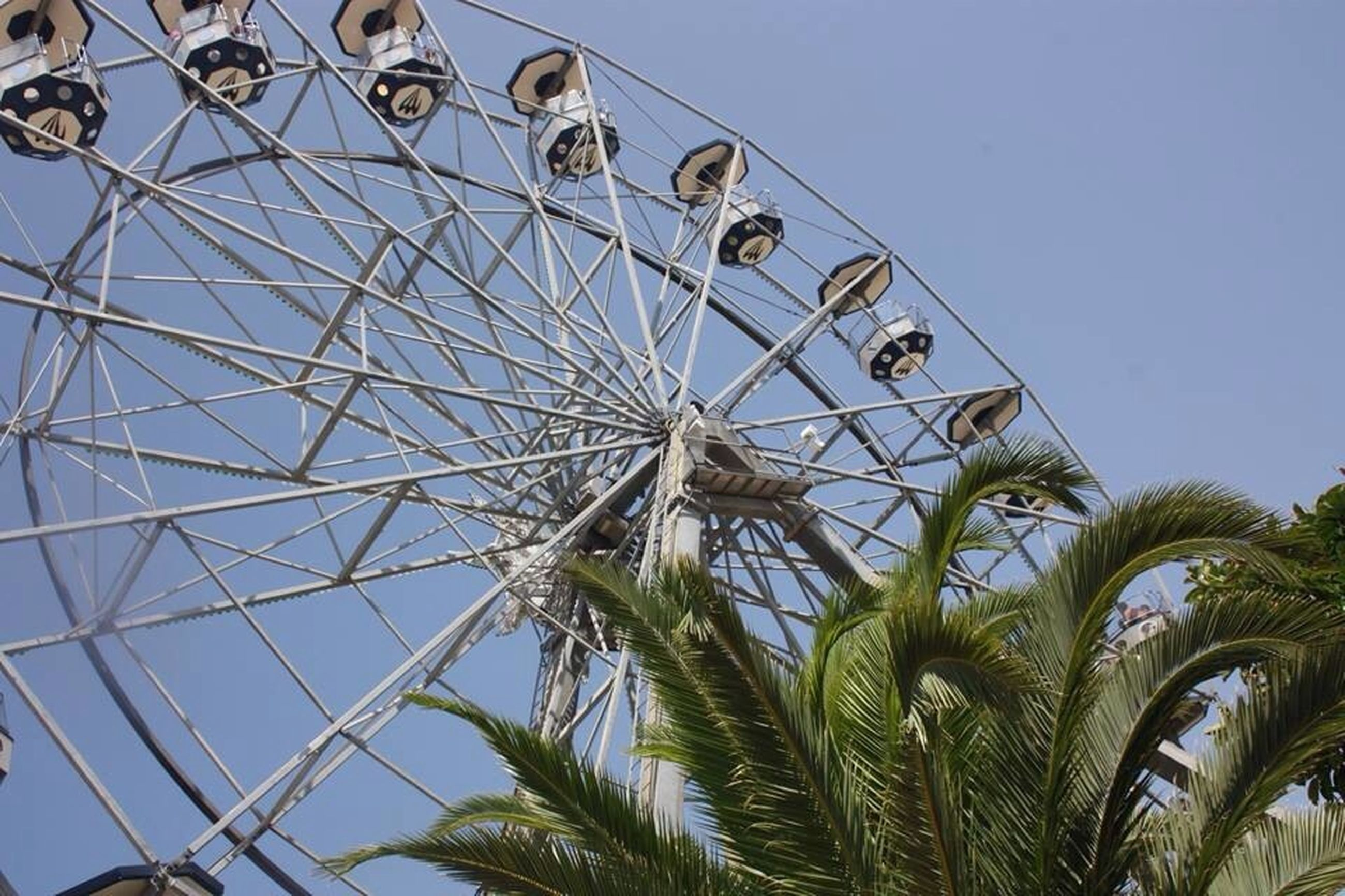 low angle view, clear sky, amusement park, ferris wheel, amusement park ride, arts culture and entertainment, palm tree, tree, sky, blue, day, built structure, outdoors, copy space, circle, growth, no people, architecture, metal, part of