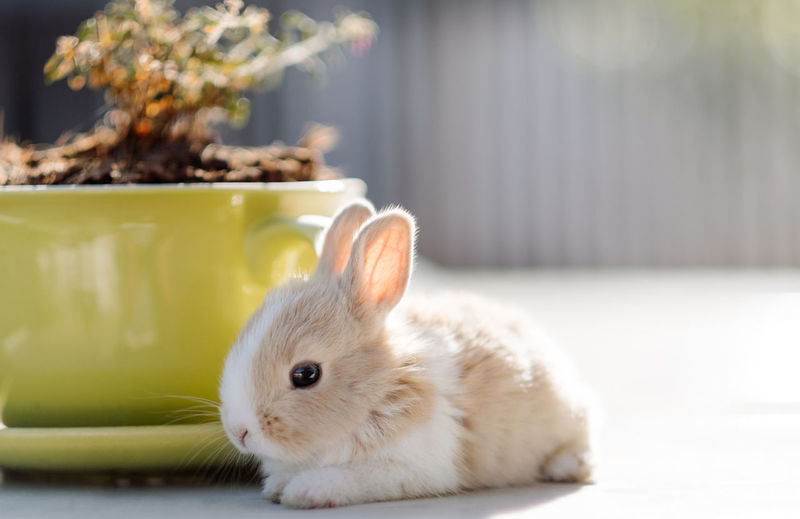 Close-up of rabbit by potted plant