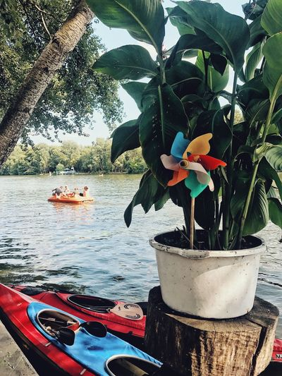 What people do on a normal Sunday. Leisure Activity Summer Weekend Lifestyles Rowing Water Sport Water Kayak Windmill Plant Nature Water Growth Day Tree No People Potted Plant Outdoors Beauty In Nature Leaf Nautical Vessel