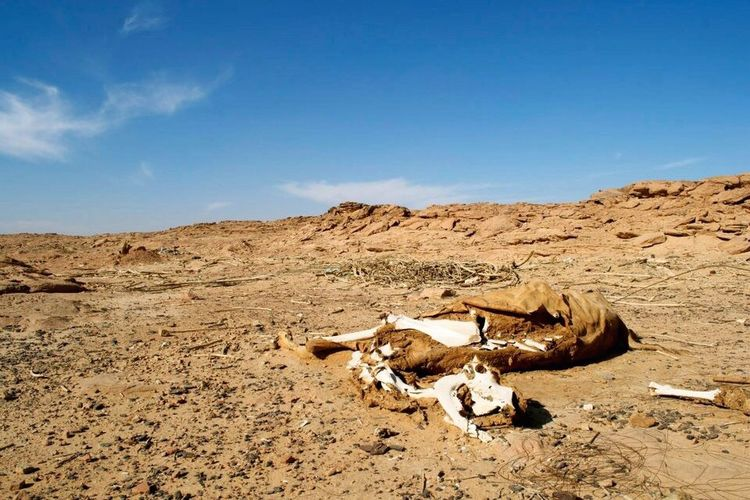 Miles Away Saudi Arabia Desert Saudi Desert Carcass Camel Arid Climate Nature Environment No People Sand Sand Dune Decompose Sakaka  No One Knows This Place EyeEmNewHere Animal Love