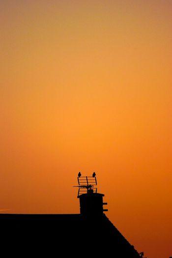 Silhouette of bird on roof against orange sky