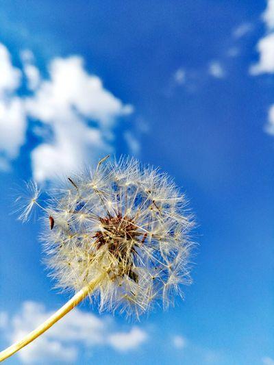 Close-Up Of Blue Flower Against Sky