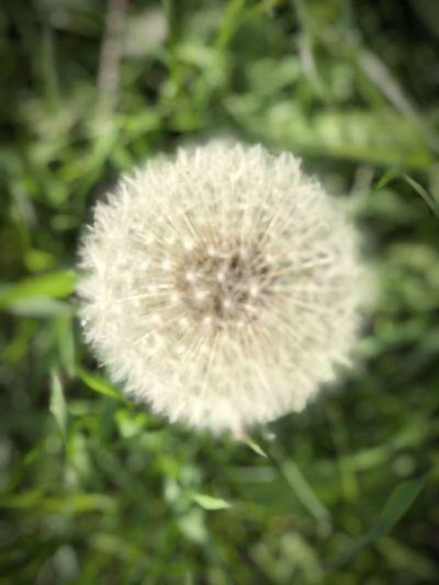 🌑 Flower