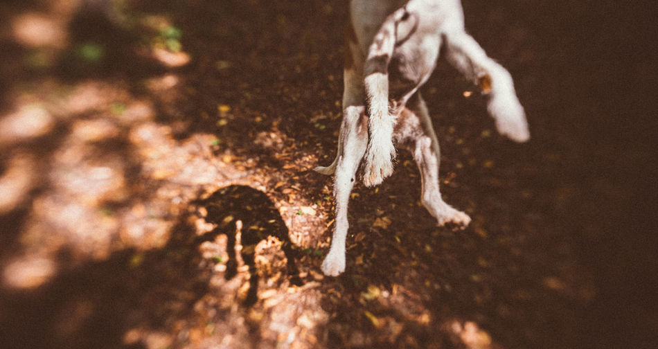 Ficko Playing with dogs can be so much fun, simple and demanding at the same time. Animal Animal Body Part Animal Leg Animal Themes Body Part Canine Close-up Day Dog Domestic Low Section Mammal Nature One Animal Outdoors Pets Selective Focus Vertebrate