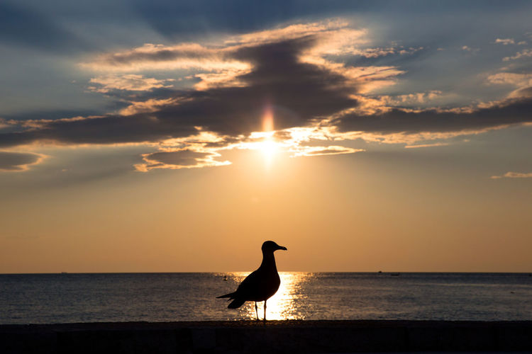 Animal Animal Themes Animal Wildlife Animals In The Wild Beauty In Nature Bird Cloud - Sky Horizon Over Water No People One Animal Outdoors Reflections In The Water Scenics - Nature Sea Seagull Silhouette Sky Sun Sunbeams Sunlight Sunset Tranquil Scene Tranquility Vertebrate Water