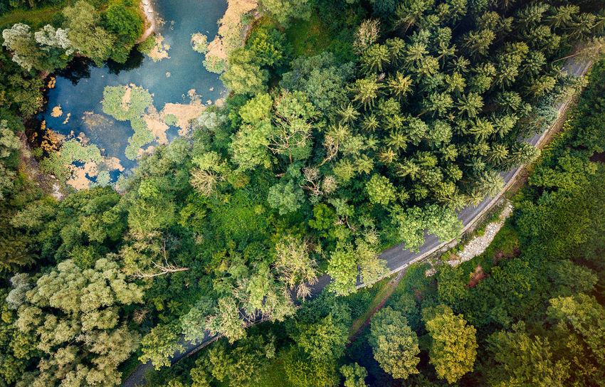 Drone  German Aerial View Beach Beauty In Nature Day Forest Forest Photography Green Color Growth High Angle View Mavic Mountain Nature No People Outdoors Scenics Tree Water