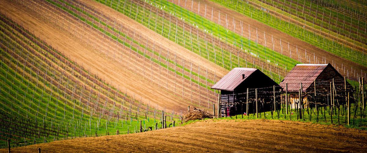 Farm Rural