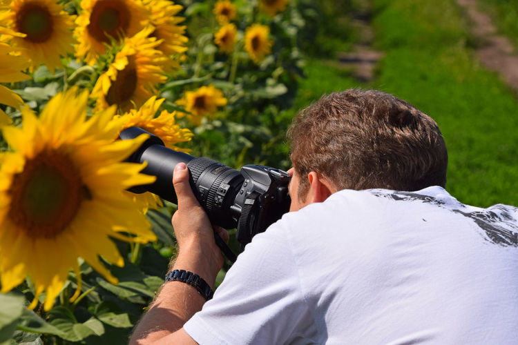 Rear view of photographer photographing sunflowers