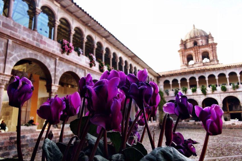 Coricancha EyeEmNewHere Cusco Peru Church Flower Perspective