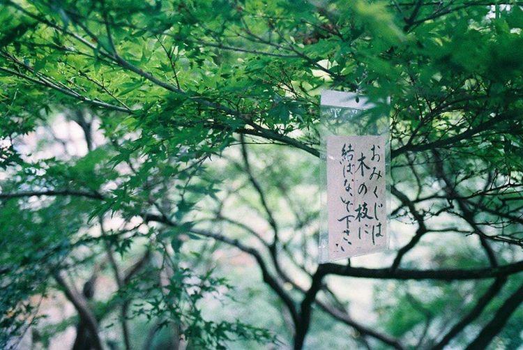 Tree Film Film