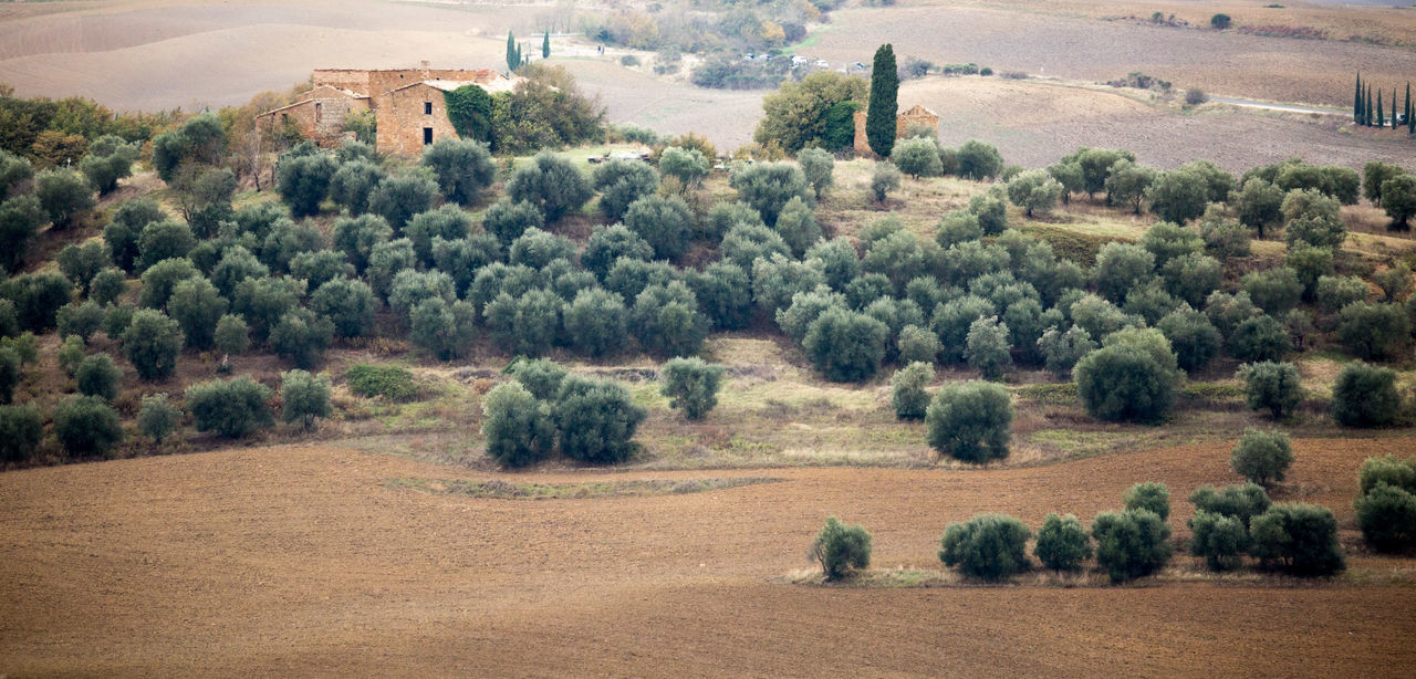 Val d'Orcia Tree Plant Landscape Environment Field Land Scenics - Nature Growth Nature Day No People Architecture Tranquil Scene Rural Scene Tranquility Agriculture Beauty In Nature Built Structure Building Exterior Outdoors EyeEmNewHere