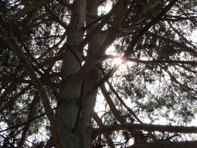 #view Low Angle View Sunlight Nature Sky Growth No People Sun Backgrounds