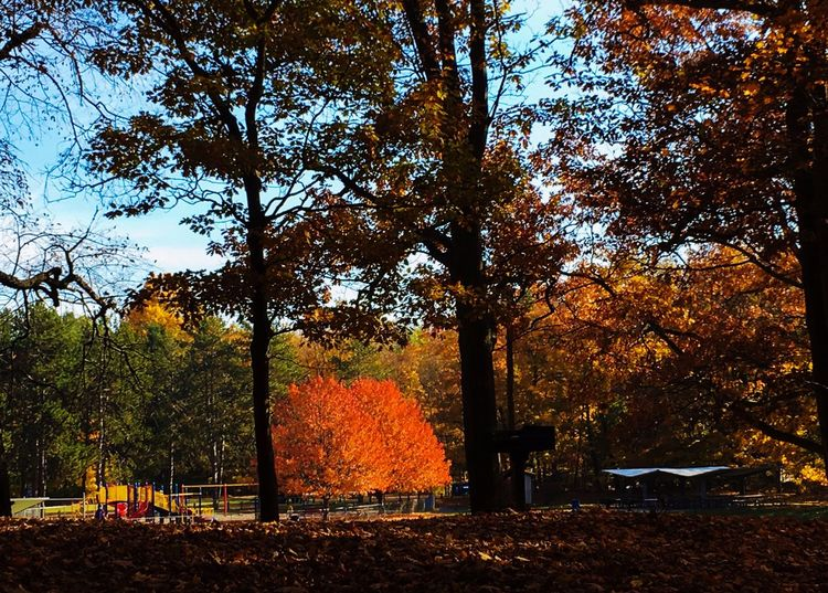 Beautiful Day At The Park Walking Around Taking Pictures Nature Autumn Day Autumn Colors Falling Leaves Tree Trees Red Red Color Fall Fall Beauty Playground No People Beauty In Nature Autumn 2015 Michigan