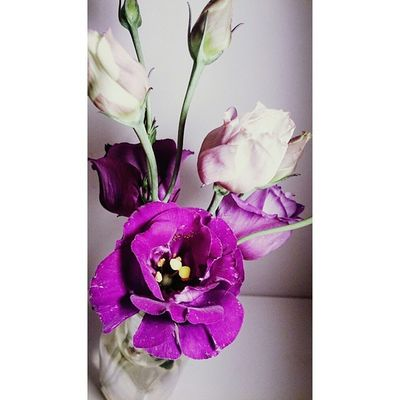 Redink Art Artistic Artisticphoto flower purple colorless cool nice cute beauty beautiful nature natural follow4follow followforfollow f4f F4F florist Contact: 93 337 88 58 Web: www.fflors.com