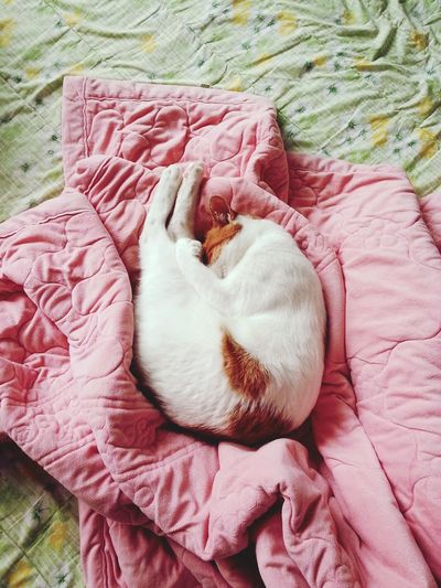 Catstagram Cat Cat Sleeping