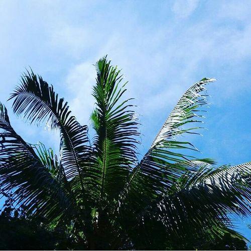 Palm Tree 🌴Summer
